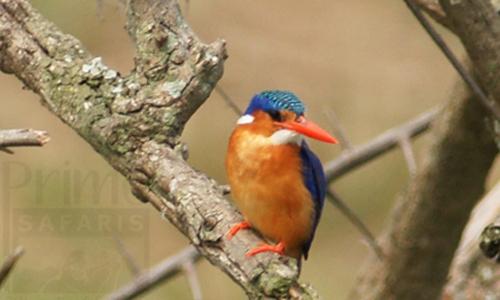 Bwindi Impenetrable Birding Spot