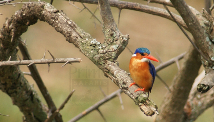 14 Days Uganda Birding Safari