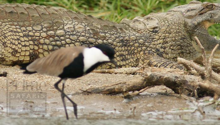 22 Uganda Rwanda Birding Tour