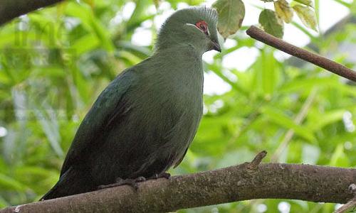 Semuliki National Park Birding Spot