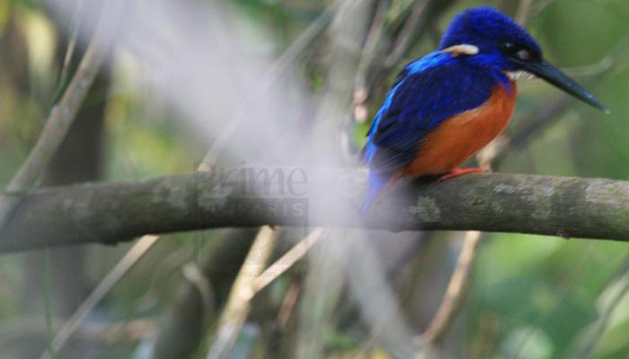 12 Days birding Uganda