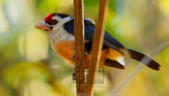 2 Days Mabamba Birding Tour