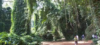 2 days Uganda birding safari Mabamba wetland