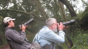 Best time for a birding safari to Semuliki National Park-Uganda safari news